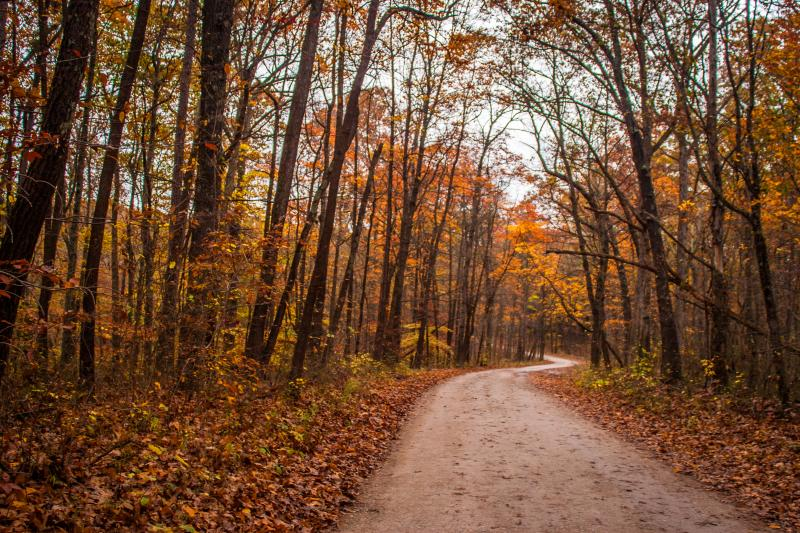 Fall foliage in the Hoosier National Forest near Bloomington, IN