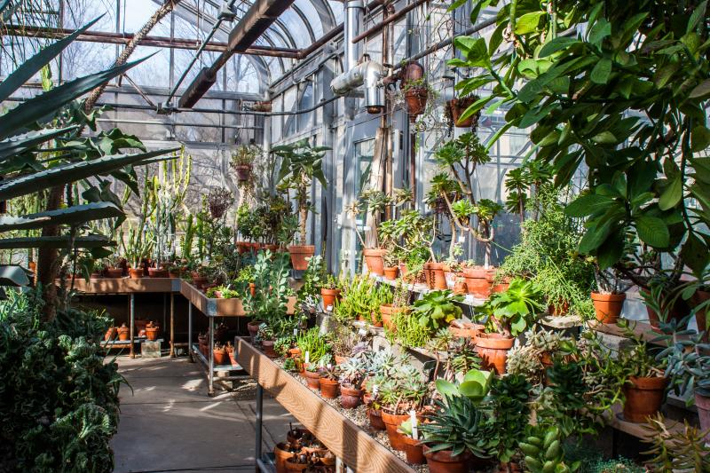 A section of the Biology Greenhouse filled with desert plants