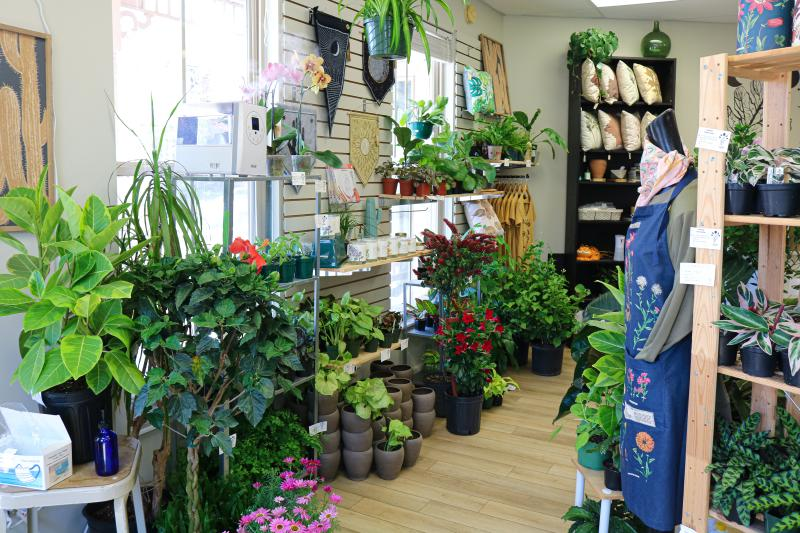Display of plants and plant-related home goods at oak.