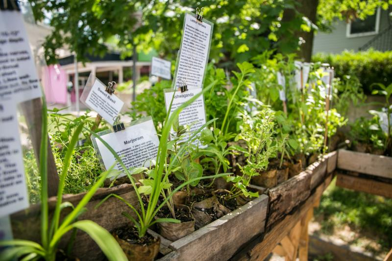 A variety of herbs and micro-greens at the Tuesday Market Bloomington