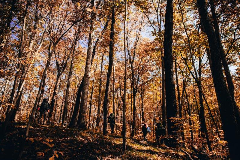 People hiking through the Hoosier National Forest during fall