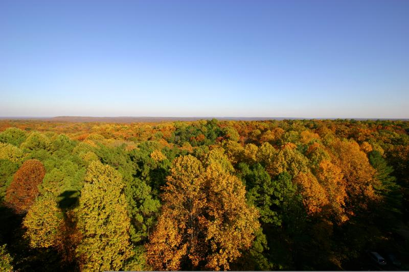 View of the Charles C. Deam Wilderness from the Hickory Ridge Fire Tower