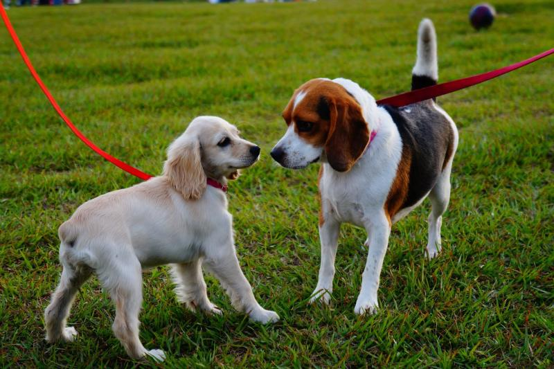 The Fredericksburg Dog Park offers socialization and exercise for dogs