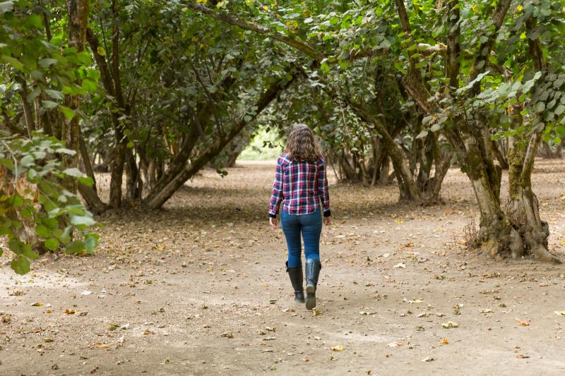Woman walks through a hazelnut orchard.