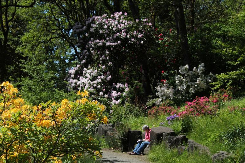 Hendricks Park in Spring by Traci Williamson
