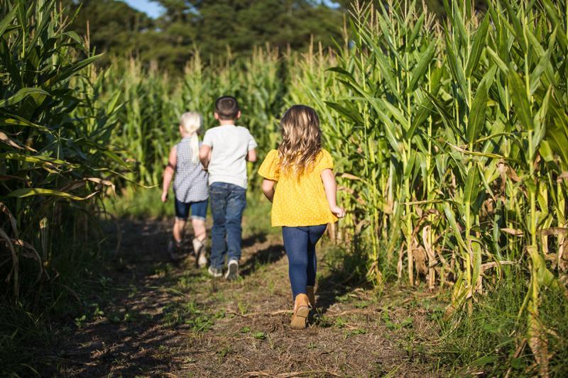 Thompson Farm and Nursey Corn Maze, Conway SC