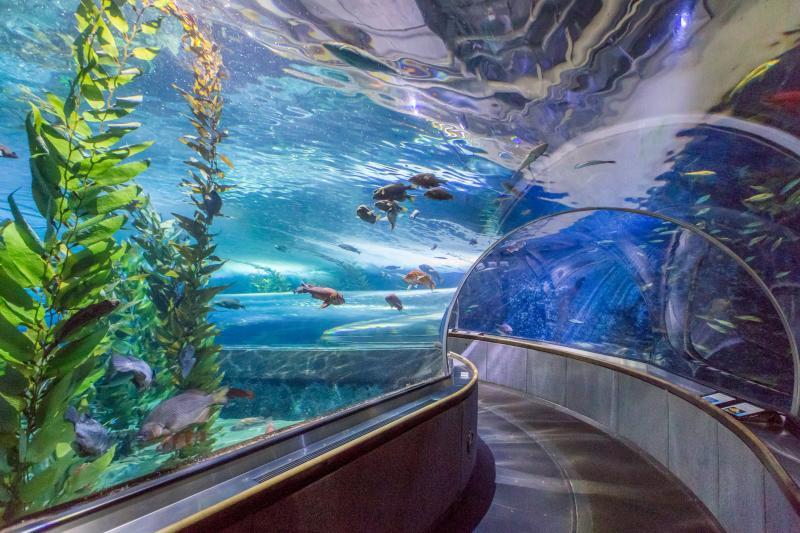 Fish exhibit at the Aquarium of the Bay in San Francisco, CA
