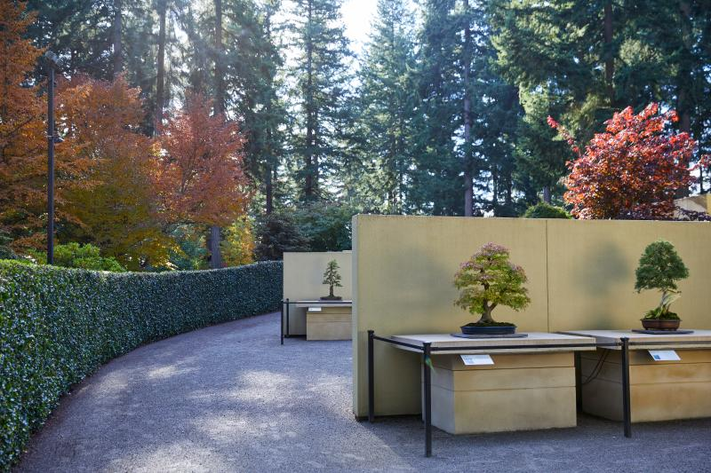 Outdoor living tree exhibits at Pacific Bonsai Museum in Federal Way