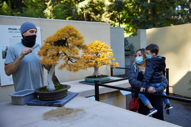 Visitors watch Tree pruning at Pacific Bonsai Museum in Federal Way