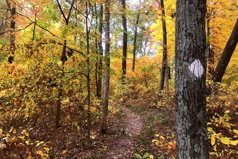Morgan-Monroe State Forest Three Lakes Trail during fall