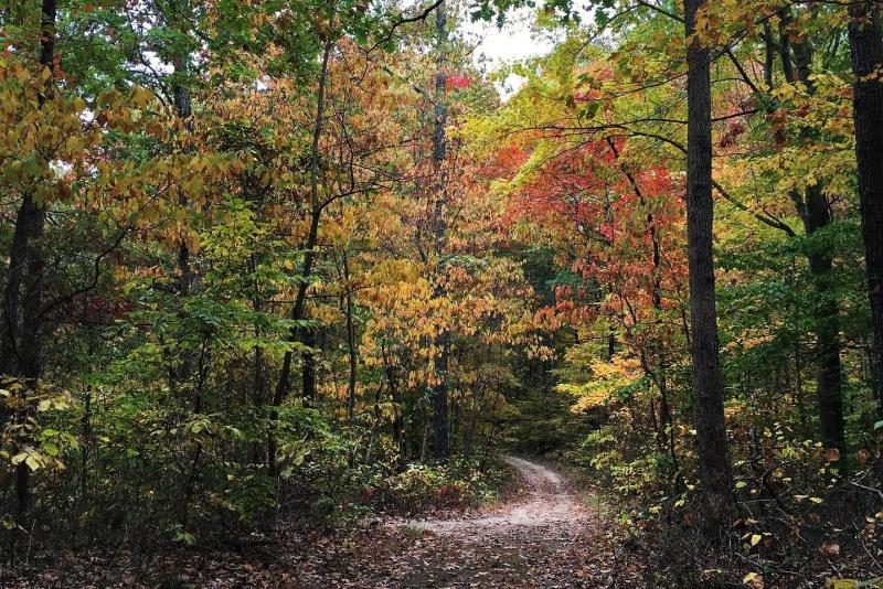 Pate Hollow Trail during fall