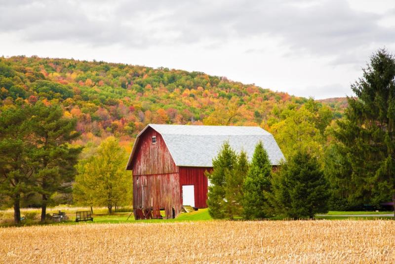 Barn with fall foliage