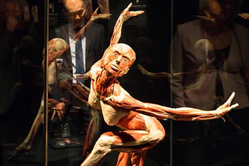 Body Worlds at the Houston Museum of Natural Science offers visitors a unique look at human anatomy.