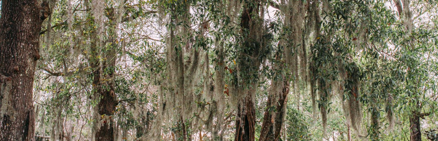 Woman looking up at the trees in Big Thicket