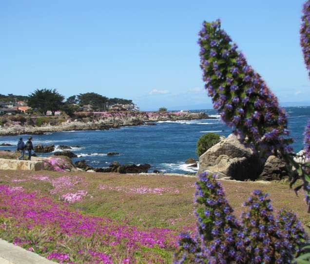 Monterey ca dating sites Aanbevolen gratis online dating websites
