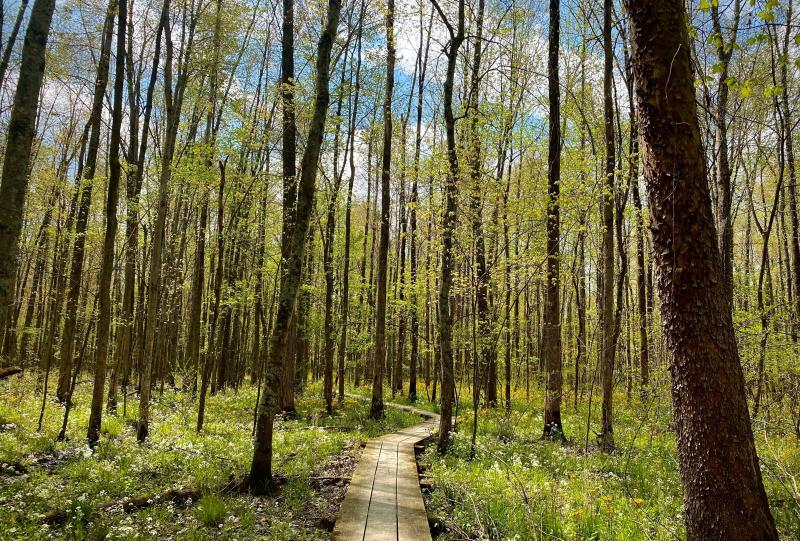 An elevated trail winds through spring flowers at Beanblossom Bottoms Nature Preserve