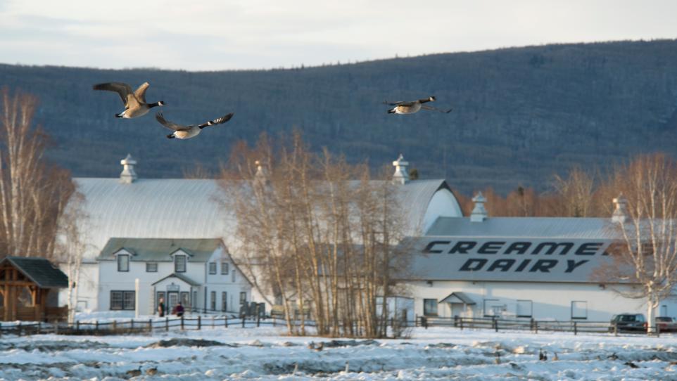 Spring birds flock to town | Explore Fairbanks, Alaska