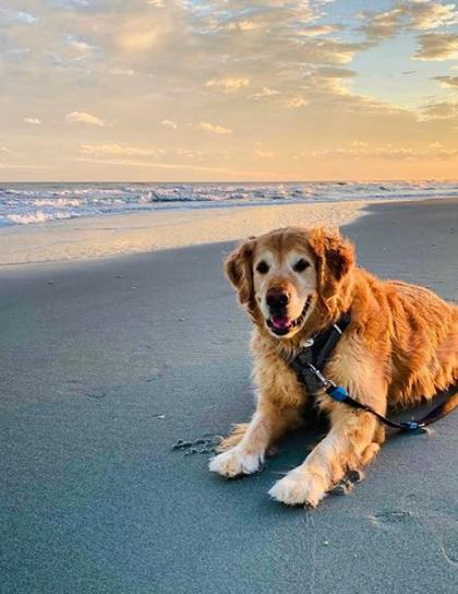 Pet-Friendly Myrtle Beach