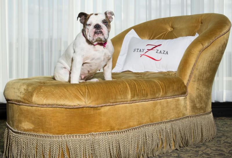 ZaZa Pet-Friendly