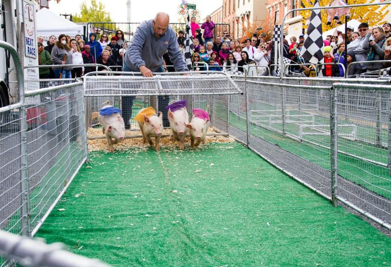 Piglets race at PA Bacon Fest