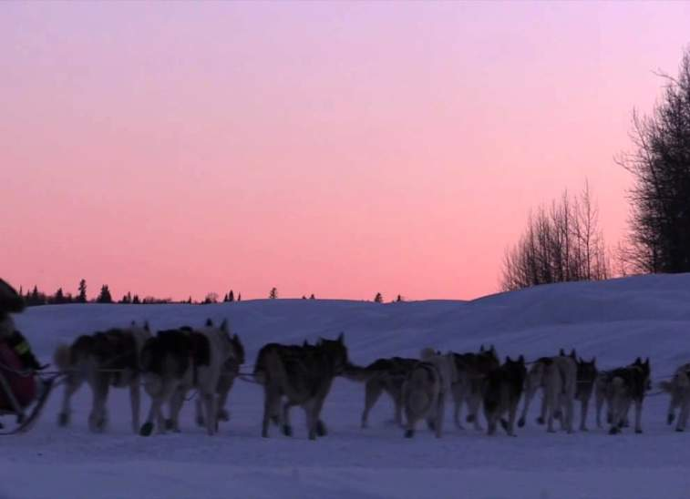 The Iditarod in the Mat-Su Valley