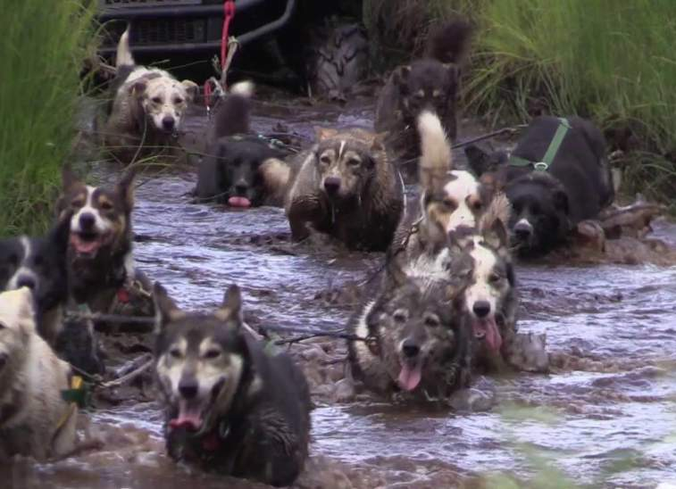 Iditarod Summer Training