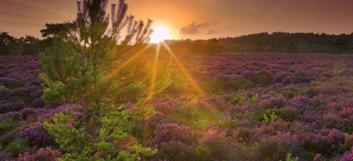 RSPB Arne Nature Reserve near Wareham in Dorset