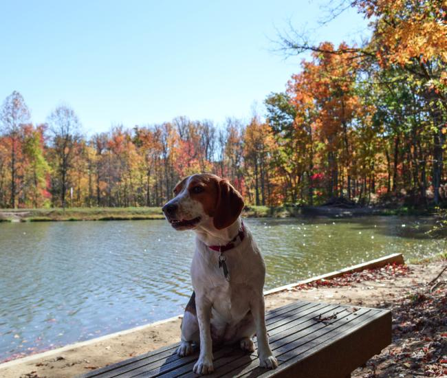 A dog sitting in front of water with trees that have fall foliage in the background