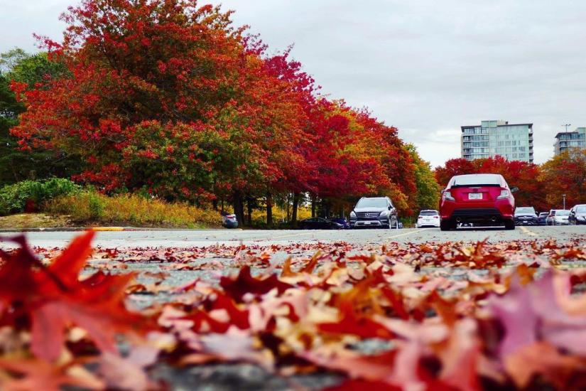 A tree-lined street in Richmond BC with leaves of red and yellow with red leaves laying on the street in the foreground - Credit: annhfhung