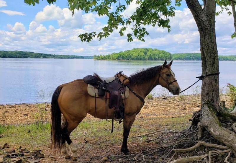 A horse on Monroe Lake in the Hoosier National Forest
