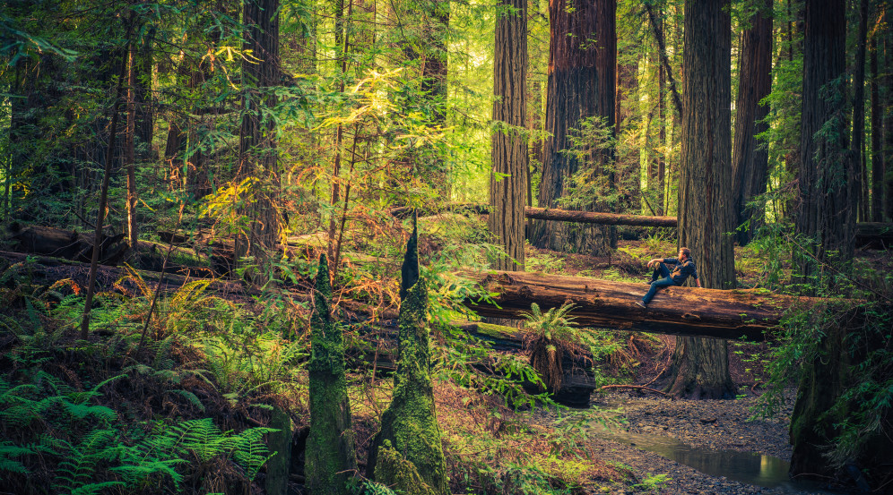 About Coastal Redwoods