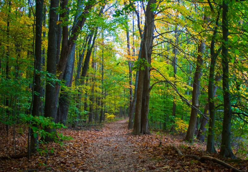 A hiking trail at Griffy Lake during fall