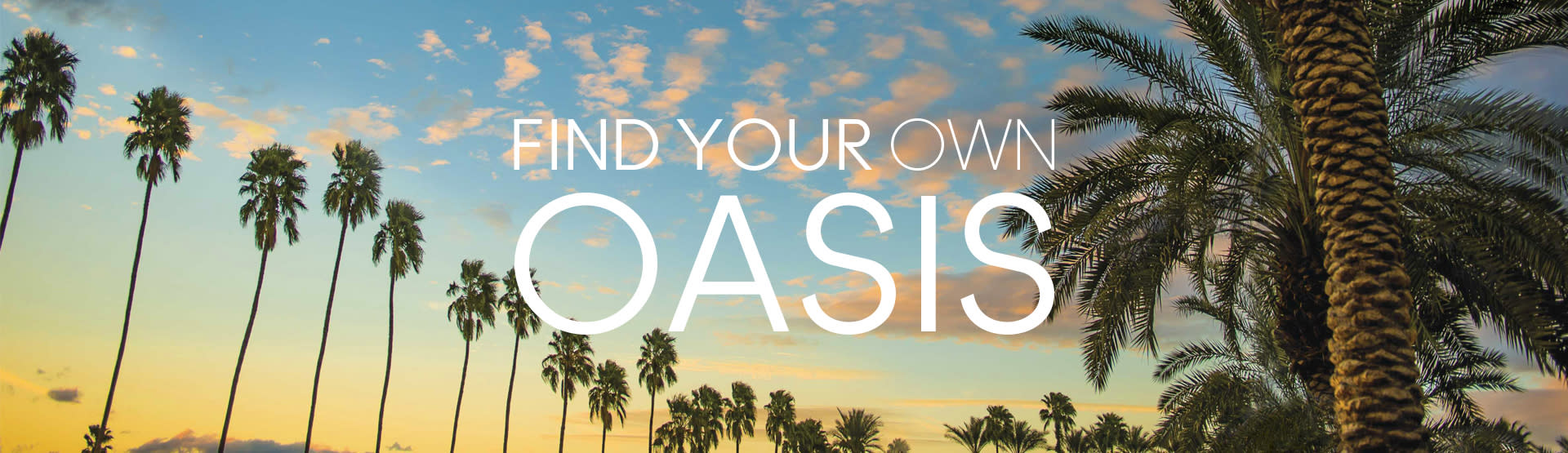 Find your own oasis with palm trees and sunset