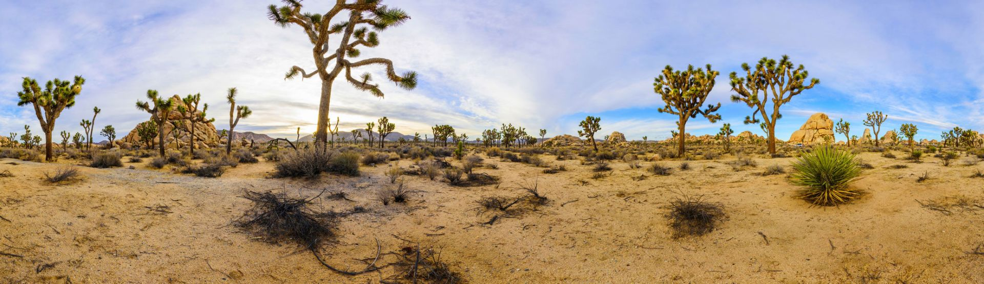 Visit Joshua Tree National Park