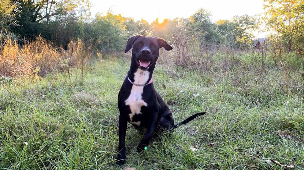 Dog at Lick Creek Park