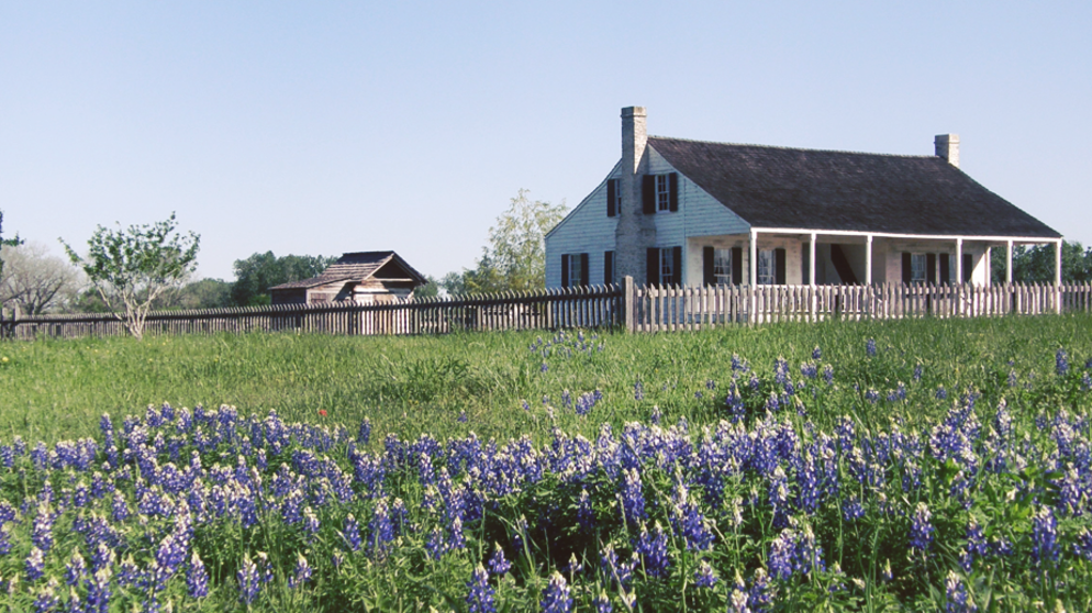 Washington On The Brazos Plantation Bluebonnets