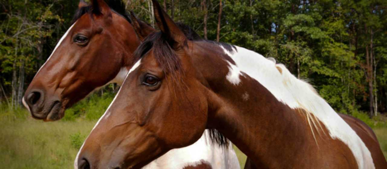 Equestrian}