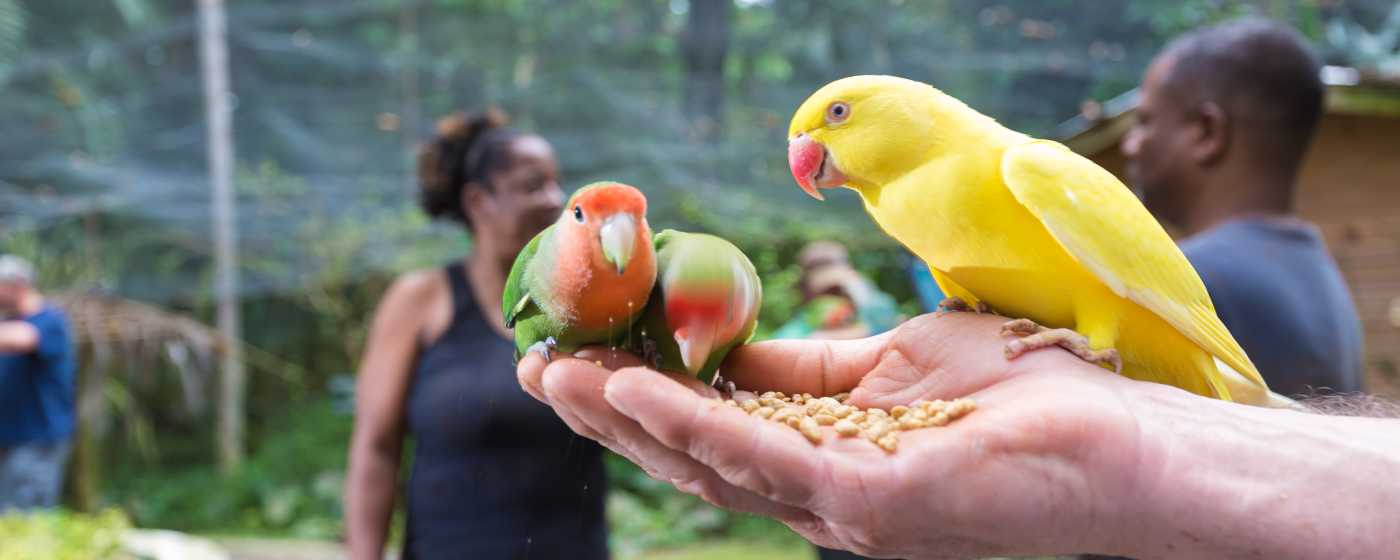 Animal Love birds