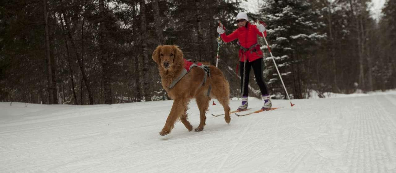 Skier with dog