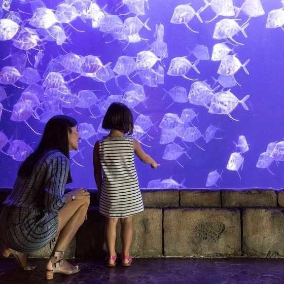 Audubon Aquarium
