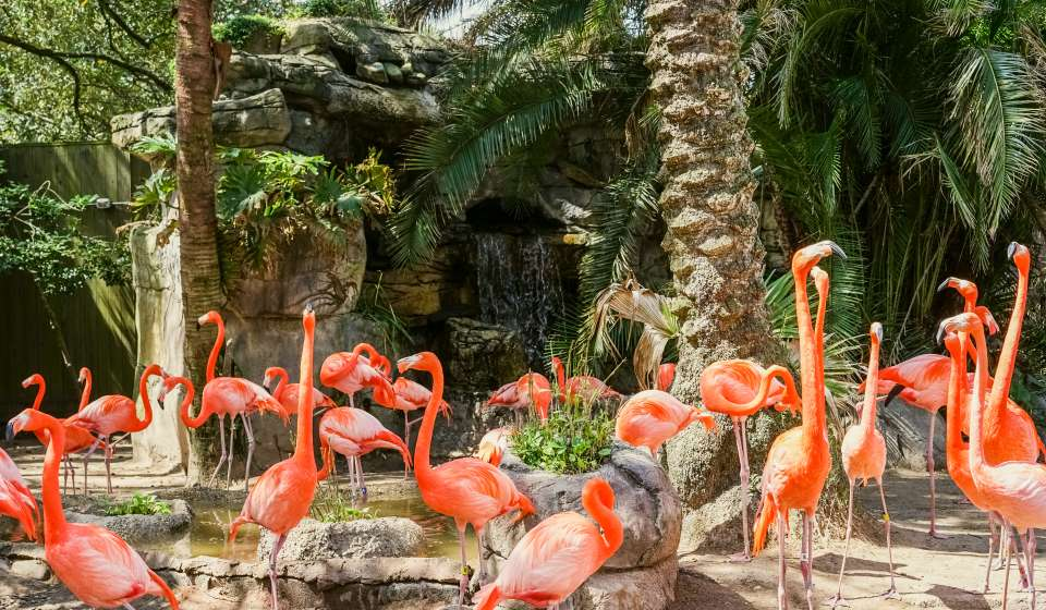 pink flamingos at the audubon zoo