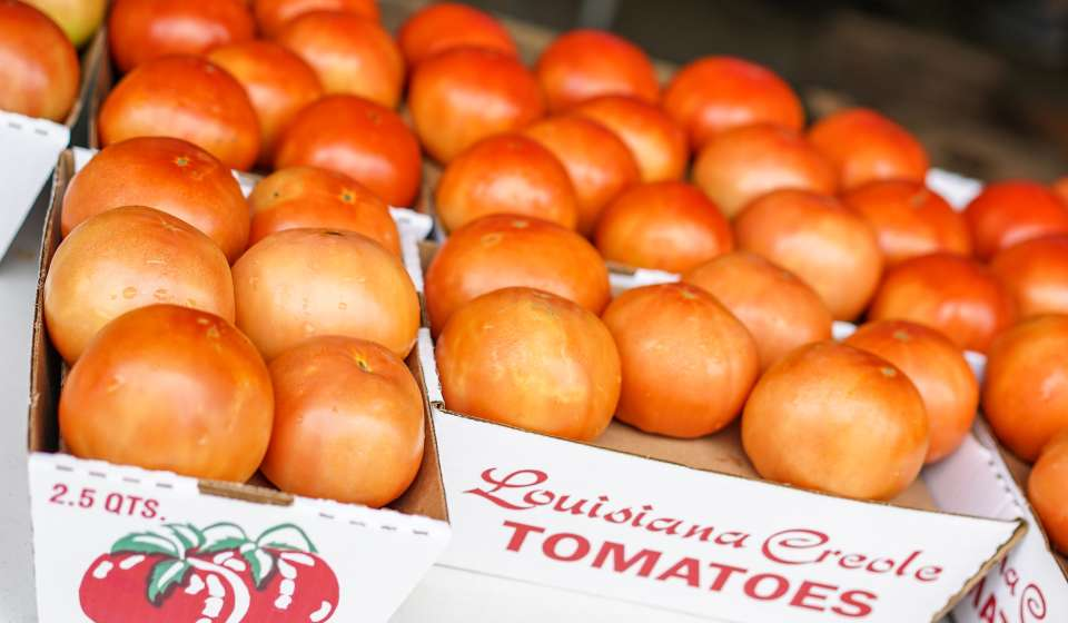 French Market Creole Tomato Festival 2015