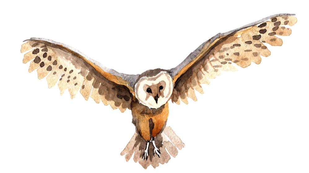 Owl Sonoma Valley