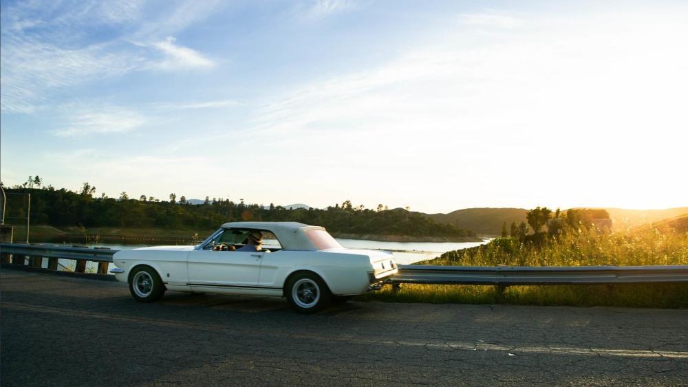 Mustang at Lake Nacimiento