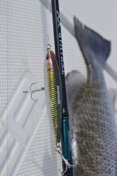 Topwater Lure and Mangrove Snapper