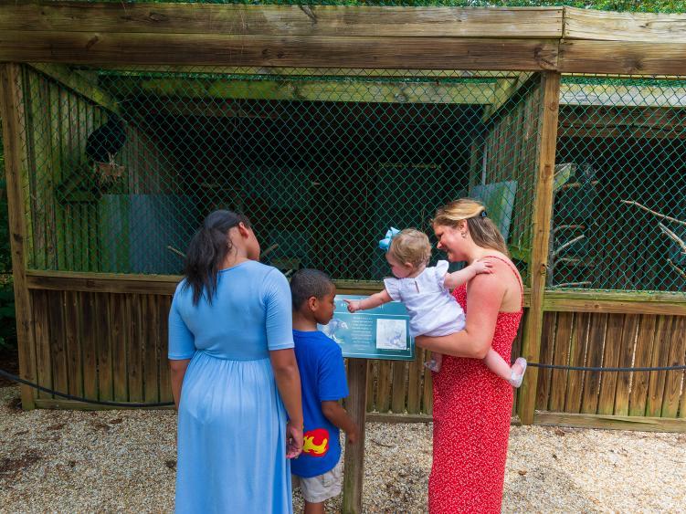 Kids enjoy exploring the birds of prey exhibit at Howell Woods