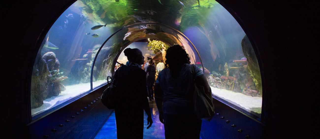 A photo of guests at Shreveport Aquarium