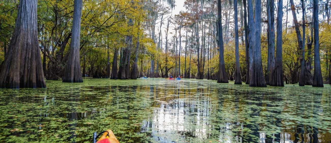 Kayak under mossy trees on Caddo Lake in northern Caddo Parish