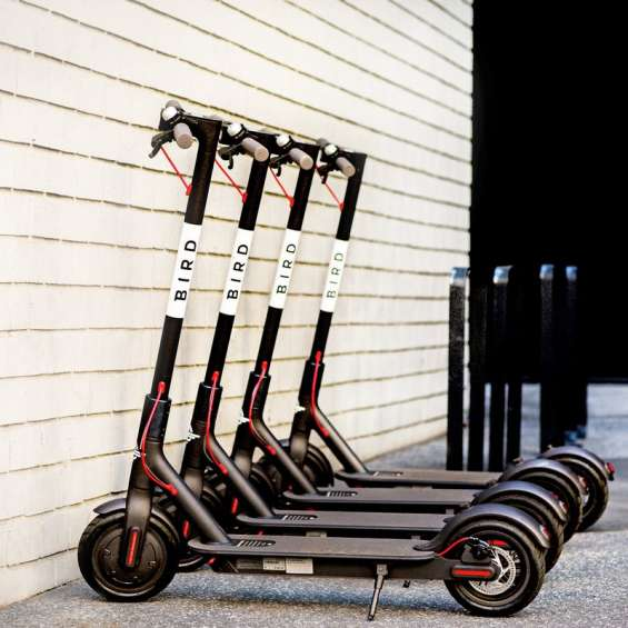 Bird Scooters Parked in a Row
