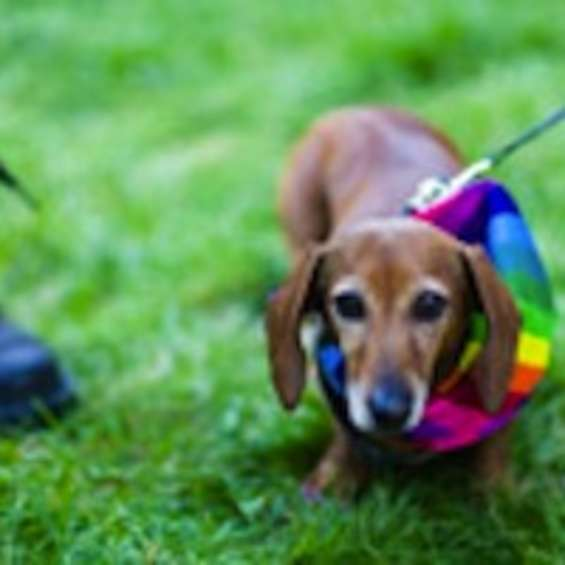Utah Pride Parade Dog Facebook Thumbnail